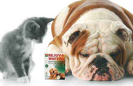 Chlorella products for pets